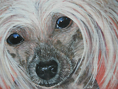 ACEO  Chinese Crested Hairless dog animal collectable print