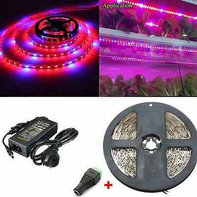 5050 Led Plant Grow Light Strip Bar Hydroponic Lamp Red+Blue+ DC 5A Power AU