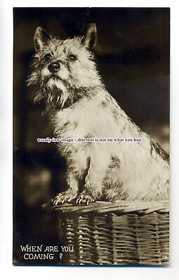 """an0817 - """" When are You Coming?"""" Dog Waiting for his Master in Basket - Postcard"""