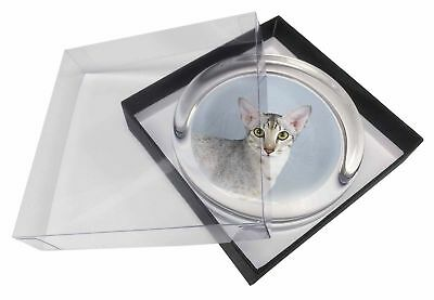 Oriental Black+Silver Cat Glass Paperweight in Gift Box Christmas Pres, AC-106PW