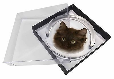 Fluffy Brown Kittens Face Glass Paperweight in Gift Box Christmas Pres, AC-152PW