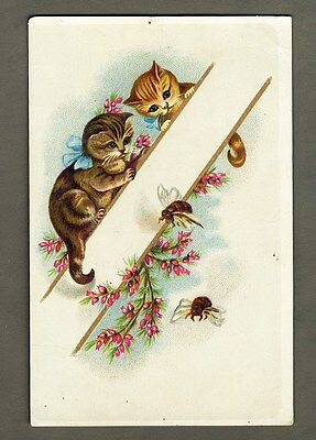 KITTEN CATS Watching BEES Buzzing By Victorian Card c 1880's