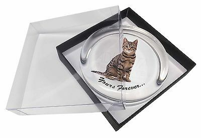 Tabby Cat 'Yours Forever' Glass Paperweight in Gift Box Christmas Pres, AC-172PW
