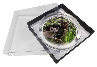 Two Burmese Cats Glass Paperweight in Gift Box Christmas Present, AC-33PW