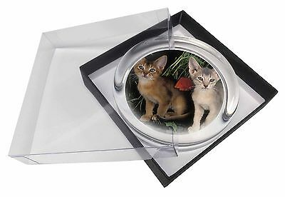 Abyssinian Cats by Poppies Glass Paperweight in Gift Box Christmas Pres, AC-42PW