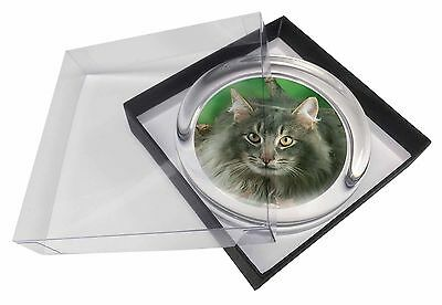 Blue Norwegian Forest Cats Glass Paperweight in Gift Box Christmas Pres, AC-55PW
