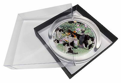 Cats and Kittens in Garden Glass Paperweight in Gift Box Christmas Pres, AC-65PW