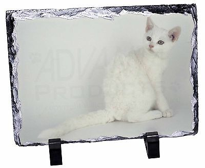 Paintings, Posters & Prints, Cat Collectables, Animal Collectables ...