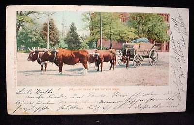 Ox Team with Cotton Seed Wagon 1903 Postcard Western