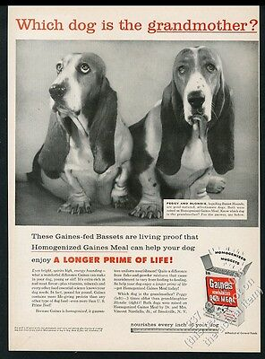 1957 Basset Hound dogs photo Gaines Dog Meal food vintage print ad