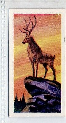 #1 Deer - Animals of the World 1956 Card
