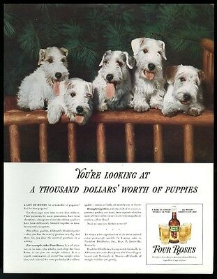 1938 Sealyham Terrier 5 dogs photo Four Roses Whiskey vintage print ad
