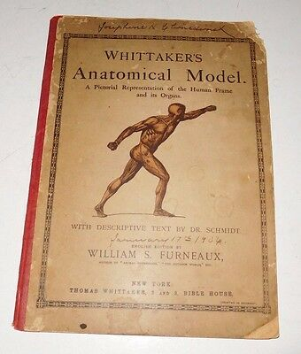 Antique Whittaker's Anatomical Model Educational Booklet