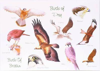 7x Birds of Prey  Picture Blank Greetings Card CLEARANCE JOB LOT
