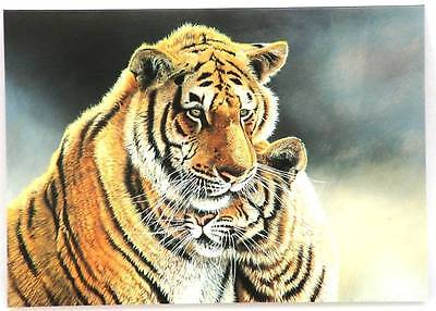 8 x Tiger and Cub  Picture Blank Greetings Card CLEARANCE JOB LOT