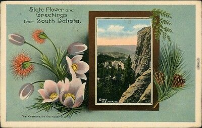 Ansichtskarte  State Flower an Greetings form South Dakota 1913