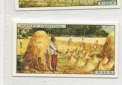 #30 rice 3 java harvesting rice - world products card r