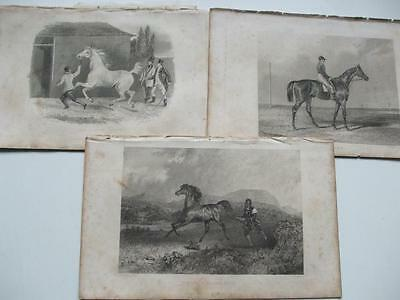 SPICEY SCREW DON JOHN DICK & BLACK DICK 1830s ENGRAVINGS RACE HORSES