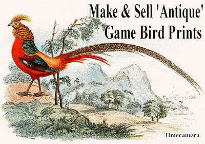 Print & Sell Restored ANTIQUE GAME BIRD PRINTS - High Res. Images on a DVD-Rom
