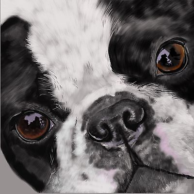 """Print - Boston Terrier- Up Close and Personal 12""""x12'"""