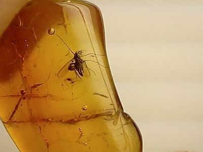 Baltic Amber #61 - Winged Insect Inclusion