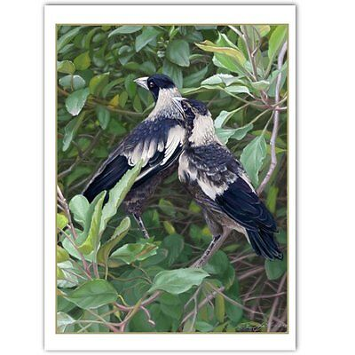 © ART - BIRD Australian Magpie Wildlife Original artist print by Di