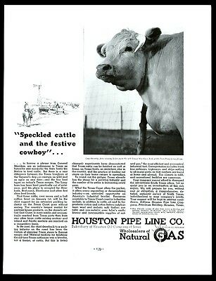 1937 Shorthorn cow heifer photo Houston natural gas pipe line vintage print ad