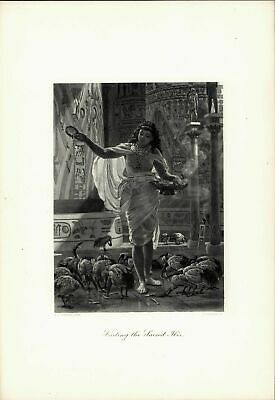 Feeding the Sacred Ibis Nudity Ancient Egypt c.1880 large antique engraved print