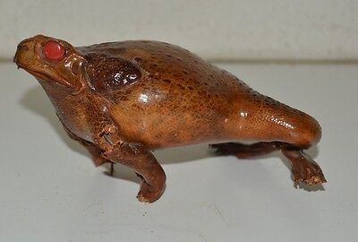 Vintage Lucky Stuffed Taxidermy Brown Frog w/ Red Eyes FAIR CONDITION