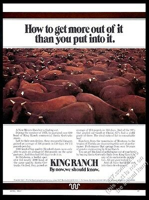 1977 King Ranch Texas Santa Gertrudis cattle herd photo vintage print ad