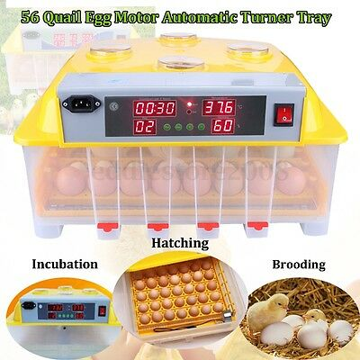 Digital 56 Egg Incubator Automatic Hatch Turner Chicken Bird Quail Poultry 110V