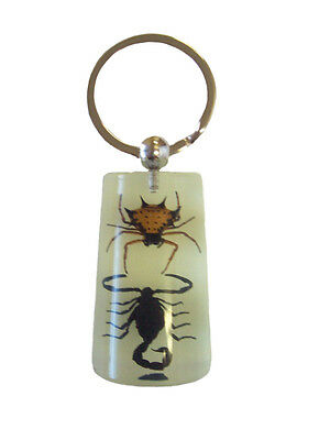 Glow In The Dark Lucite Keychain with Real Black Scorpion & Spiny Spider YK1015