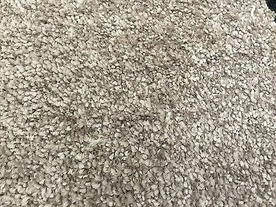 Champagne Coloured Carpet | Includes FREE 10mm Underlay | 4m Wide | Hessian Back