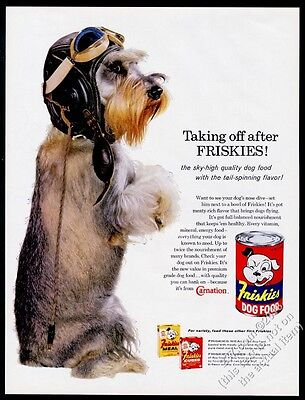 1960 miniature schnauzer photo in pilot flight helmet Friskies dog food print ad