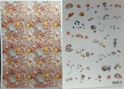 A4 Background Paper Pretty Shells NEW