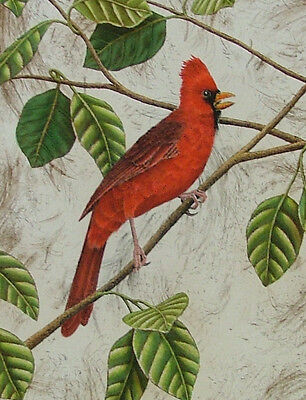 """Cardinal Life Size Etching Handcolored 12""""x9"""" by John Costin 1/175"""