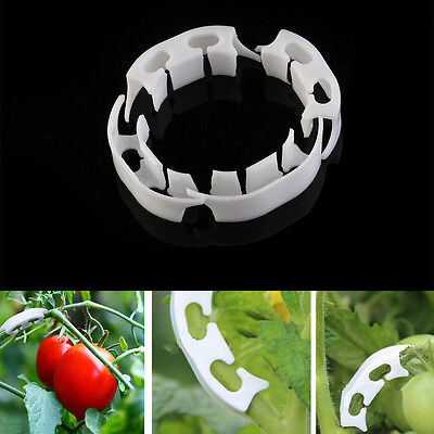 10Pcs Tomato Fixing Clips Cucumbers Pepper Stem Support Clip Plant Ties Support