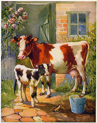 Cow and Calf - A E Kennedy - 1953 - Charming vintage illustration