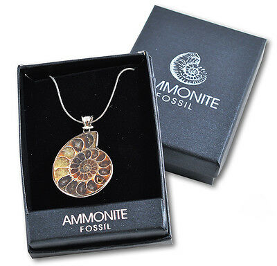 NEW Fossil Ammonite Pendant & Necklace - sliced & polished Madagascar - ONE ONLY