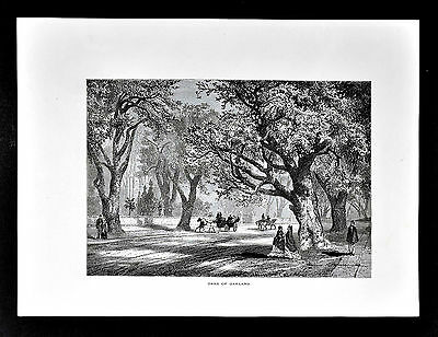 1872 Picturesque American Print - Oaks of Oakland - California Park Horse Buggy