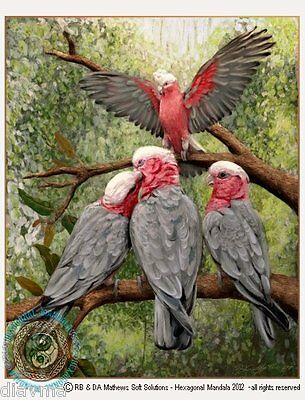 © ART -  Australian Galah Parrot Bird Illustration Original artist print by Di