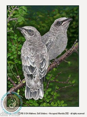 © ART Realism Bird Illustration Original Australian wildlife Artist Print by Di