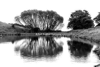Trees Reflected 2 Art Photograph Mounted Print 10 mount colours Greetings Cards