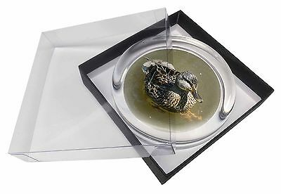 An Inquisitive Little Duck Glass Paperweight in Gift Box Christmas Pres, AB-D3PW