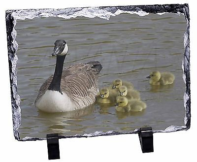 Canadian Geese and Goslings Photo Slate Christmas Gift Ornament, AB-G1SL