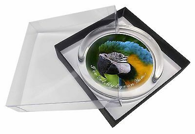 Parrot 'I've Got My Eye On You' Glass Paperweight in Gift Box Christ, AB-PA80EPW