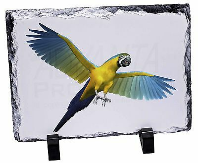 In-Flight Flying Parrot Photo Slate Christmas Gift Ornament, AB-PA9SL