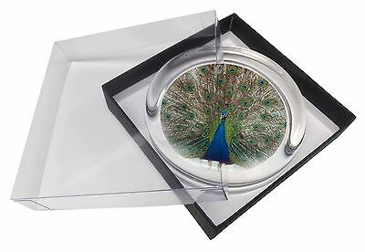 Rainbow Feathers Peacock Glass Paperweight in Gift Box Christmas Pres, AB-PE13PW