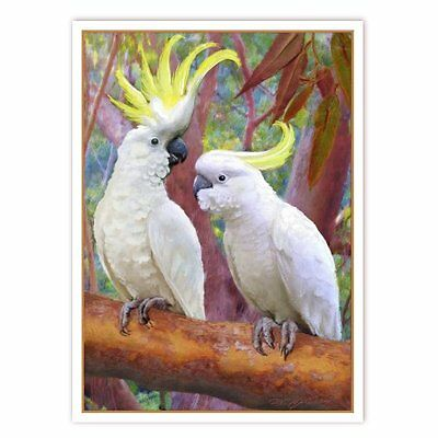 © ART - sulphur crested white cockatoo Original wildlife Bird Artist Print by Di