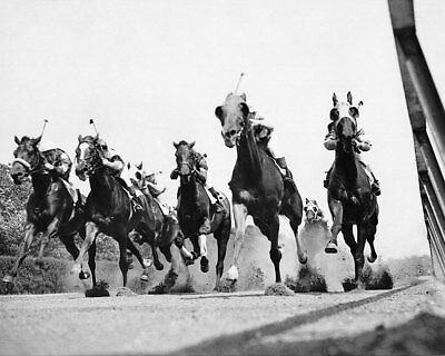 Thoroughbred Horse Race at Belmont Track 11x14 Silver Halide Photo Print